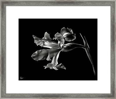Iris In Black And White Framed Print