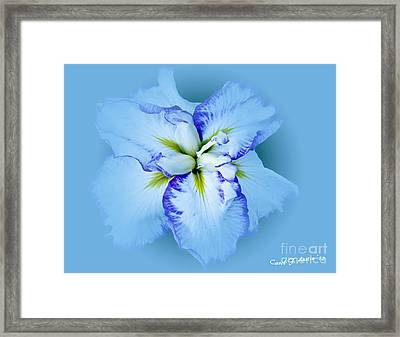 Iris In Blue Framed Print by Carol F Austin