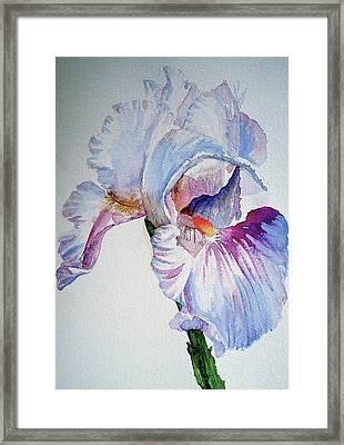 Iris In The Garden Framed Print