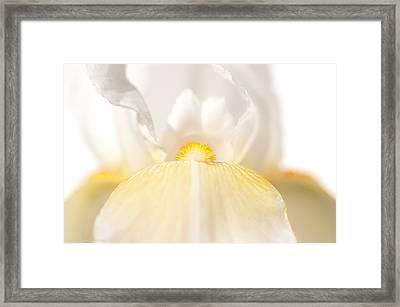 Iris Framed Print by Jerri Moon Cantone