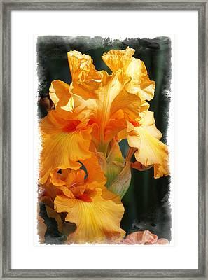 Iris Framed Print by Judy Deist