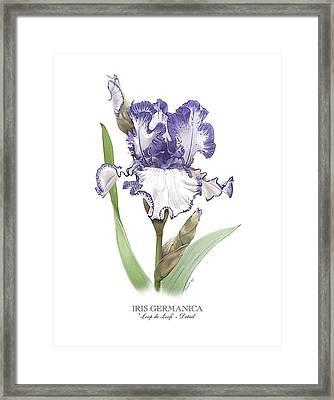 Iris Loop De Loop Framed Print