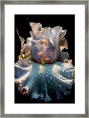 Iris Framed Print by Monika A Leon