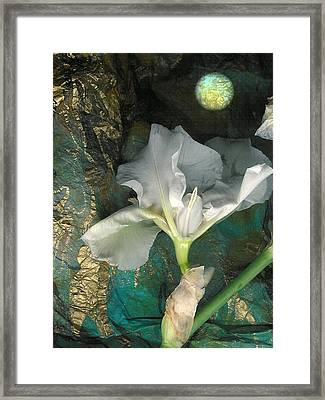 Iris Moon Framed Print by George  Page