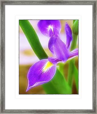 Iris On Pointe Framed Print by Judi Bagwell