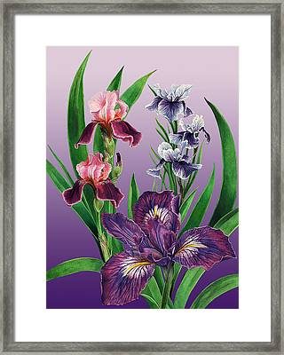 Iris On Purple Framed Print