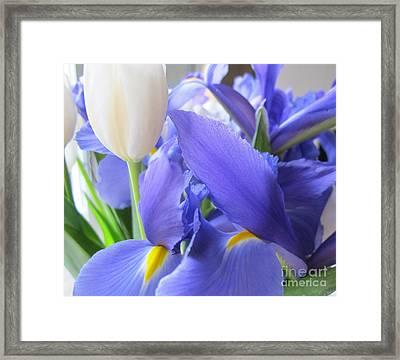 Framed Print featuring the photograph Iris Petal by Arlene Carmel