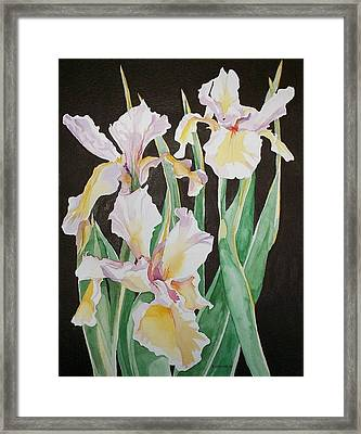 Framed Print featuring the painting Iris  by Richard Willows