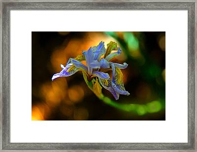 Framed Print featuring the photograph Iris by Tam Ryan