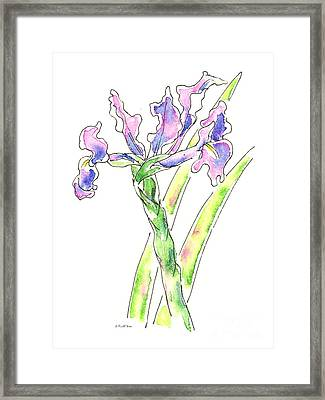 Iris Watercolor Painting 1 Framed Print by Gordon Punt