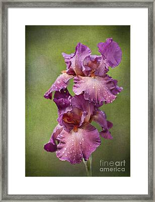 Framed Print featuring the photograph Iris With Raindrops by Cheryl Davis