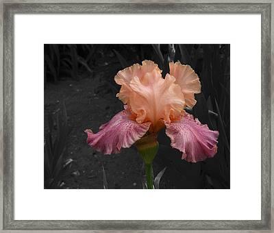 Framed Print featuring the photograph Iris2 by David Pantuso