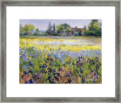 Irises And Two Fir Trees Framed Print by Timothy Easton
