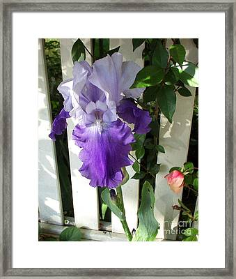 Irises Fenced In  Framed Print by The Kepharts