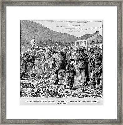 Irish Peasants Seizing The Potato Crop Framed Print by Everett