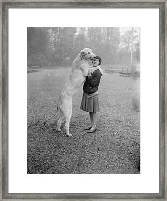Irish Wolfhound Framed Print by Bellamy
