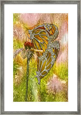 Iron Butterflys Framed Print by Jack Zulli