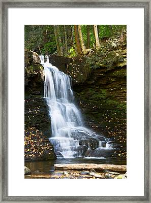 Is It Cottonwood Framed Print