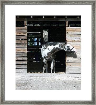 Is It Safe To Come Out Framed Print