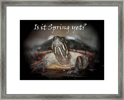 Is It Spring Yet Turtle Framed Print by LeeAnn McLaneGoetz McLaneGoetzStudioLLCcom