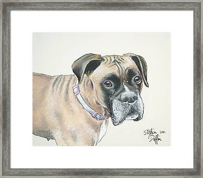 Is Pink Really My Color... Framed Print by Stephen Duffin