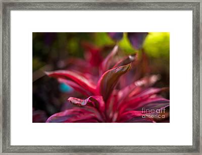Island Bromeliad Framed Print by Mike Reid
