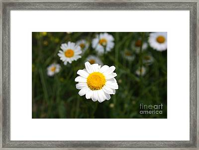 Framed Print featuring the photograph Isn't That A Daisy by Tony Cooper