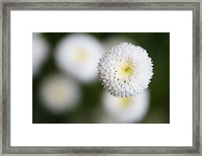 Isolated White Flower Bud Framed Print by Tim Green