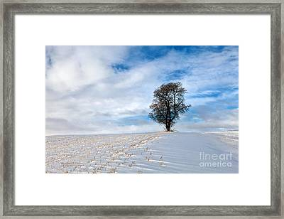 Isolation Framed Print by Beve Brown-Clark Photography