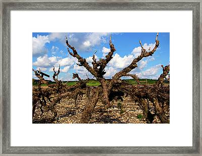 Israel's Countryside Framed Print by Gal Ashkenazi