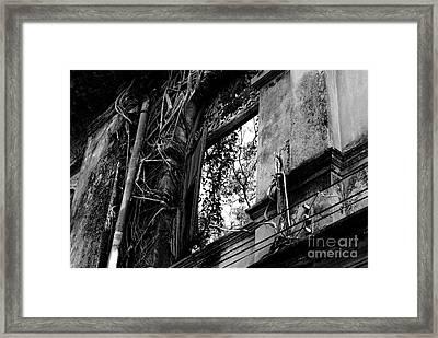 It Grows Framed Print by Dean Harte