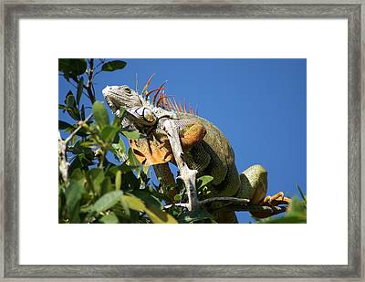 Framed Print featuring the photograph It Is A What by Jerry Cahill