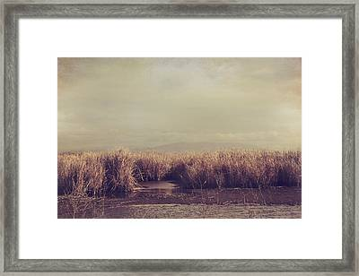 It Lives It Grows It Comes It Goes Framed Print by Laurie Search