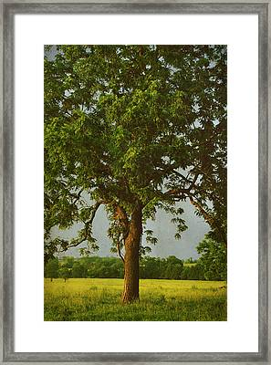 It Should Be Easy Framed Print by Laurie Search