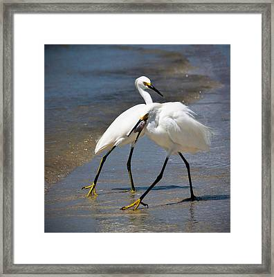 It Takes Two To Tango Framed Print by Vicki Jauron