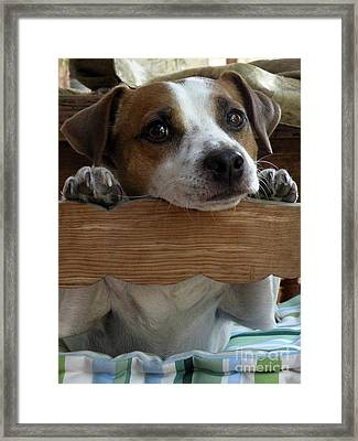 It Wasnt Me Framed Print by Graham Taylor