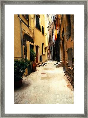 Italian Alley Kitty Framed Print by Virginia Furness