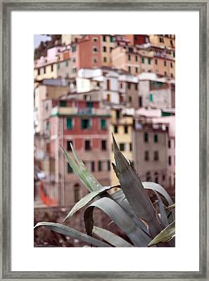 Italian Aloe Framed Print by Mike Reid