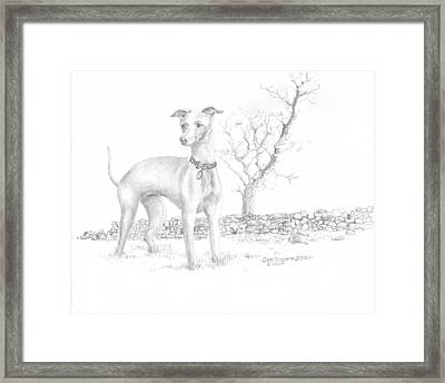 Framed Print featuring the drawing Italian Greyhound by Jim Hubbard