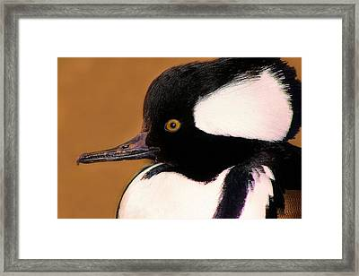 It's A Duck's Life Framed Print by Paulette Thomas