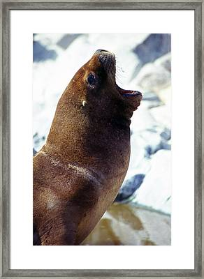 It's A Hard Life ... Framed Print by Juergen Weiss
