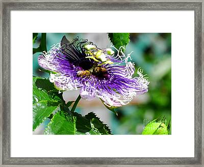 Framed Print featuring the photograph It's A Passion by Linda Mesibov