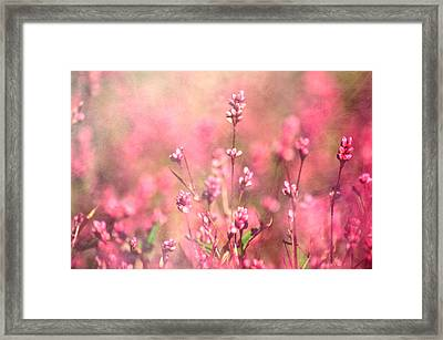 It's A Sweet Sweet Life Framed Print