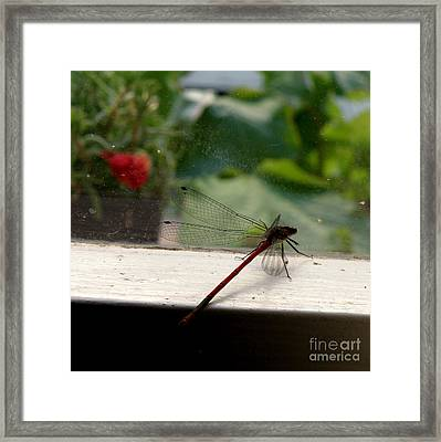 Framed Print featuring the photograph It's Always Greener by Lainie Wrightson