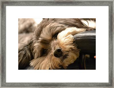 It's Been A Long Day Framed Print by Bonnie Myszka