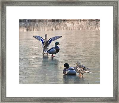 Its Hard To Lead When No One Will Follow Framed Print