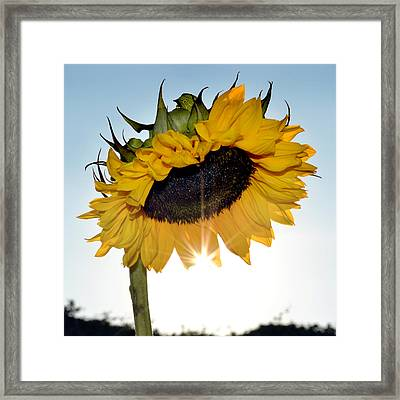 It's Hot Hot Hot. Framed Print by Terence Davis