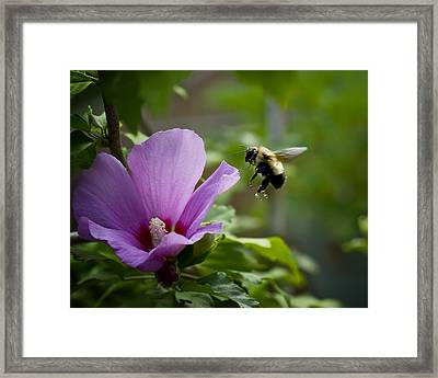 It's Supper Time Framed Print by Michael Putnam