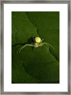 Itsy Bitsy Spider Framed Print by Rianna Stackhouse