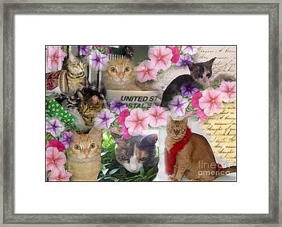 Itty Bitty Kitties Framed Print
